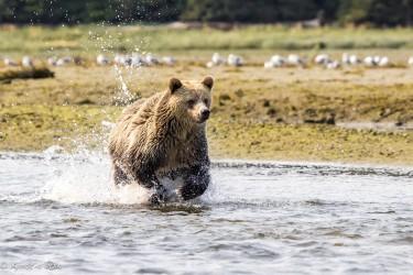 Cedar fishing