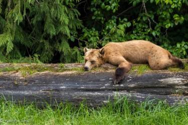 2015 Sitka and Cedar