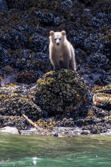 2015 Lenore's cub (June)